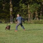 Angriff auf den Hund